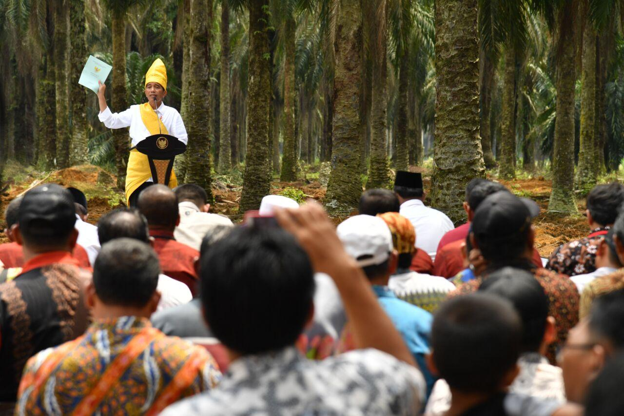 Presiden Resmikan Peremajaan 25.423 Hektare Lahan Sawit untuk Rakyat di Riau