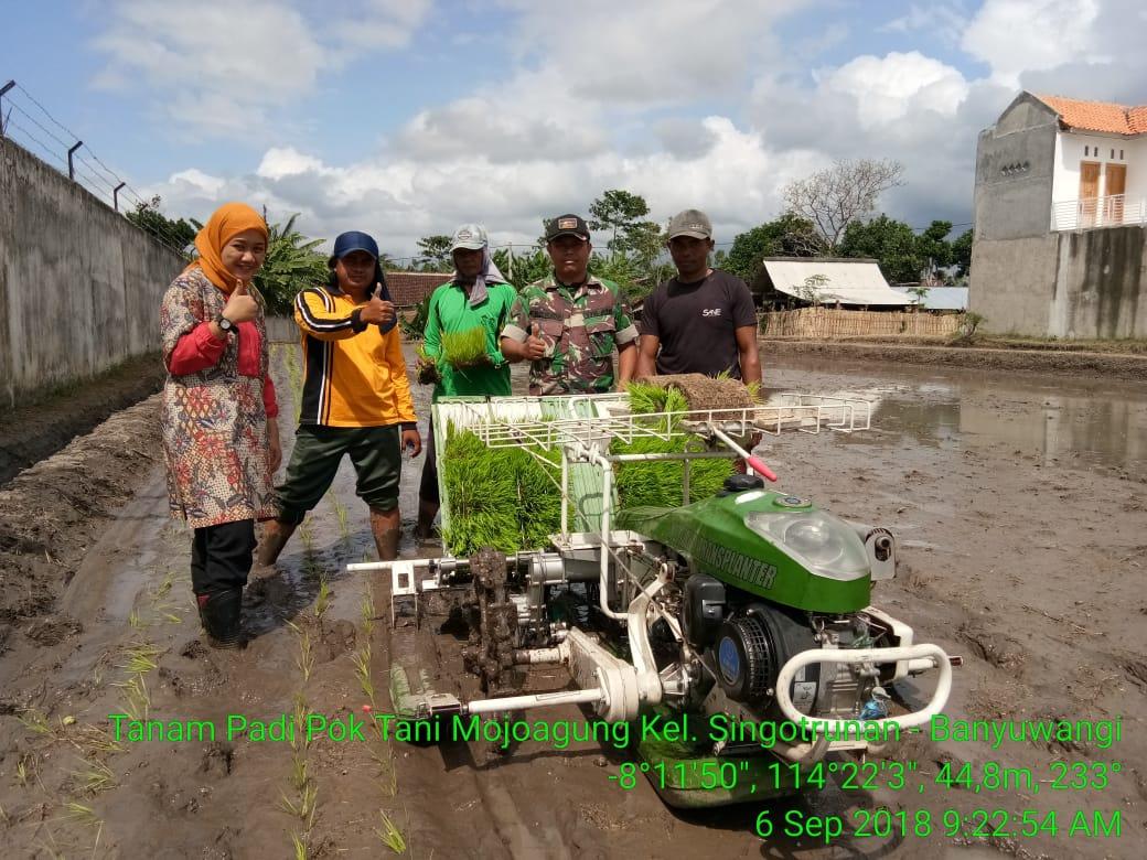 Dukung Percepatan Swasembada Pangan, Koramil 0825/01 Banyuwangi Laksanakan Percobaan Tanam Padi Dengan Rice Transplanter