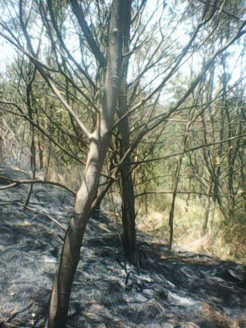 Hutan di Gunung Sindoro Terbakar