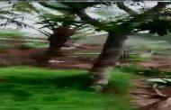 Tanah Longsor di Desa Pacarmulyo Diakibatkan Hujan Lebat