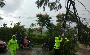 Hujan Lebat Disertai Angin Kencang Terjang Kawasan Sawangan