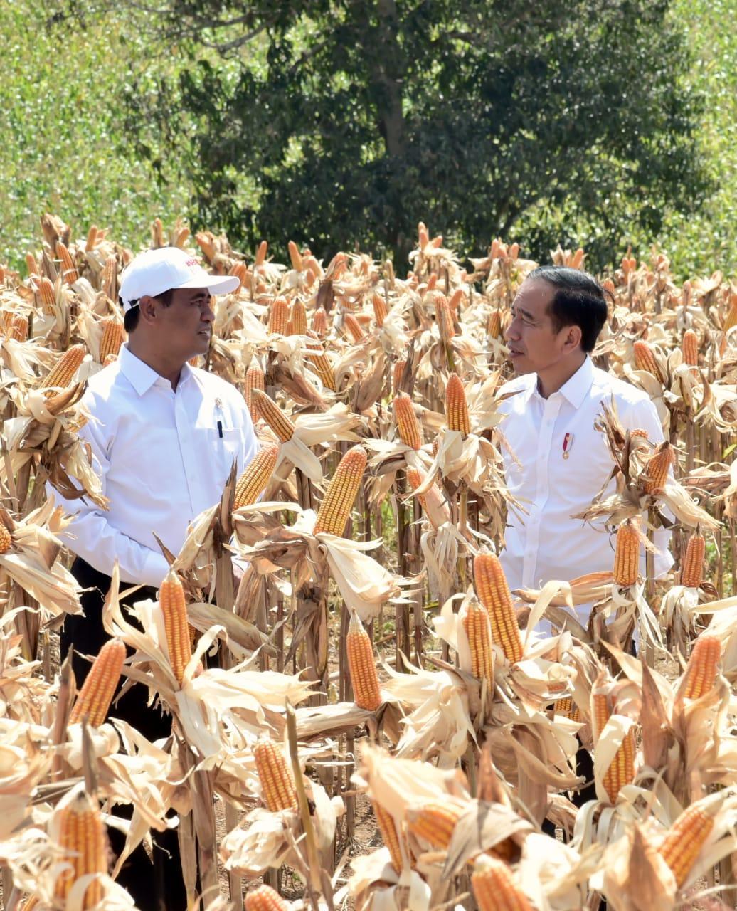 Presiden Minta Petani Jagung Jaga Kualitas Produk Agar Kompetitif