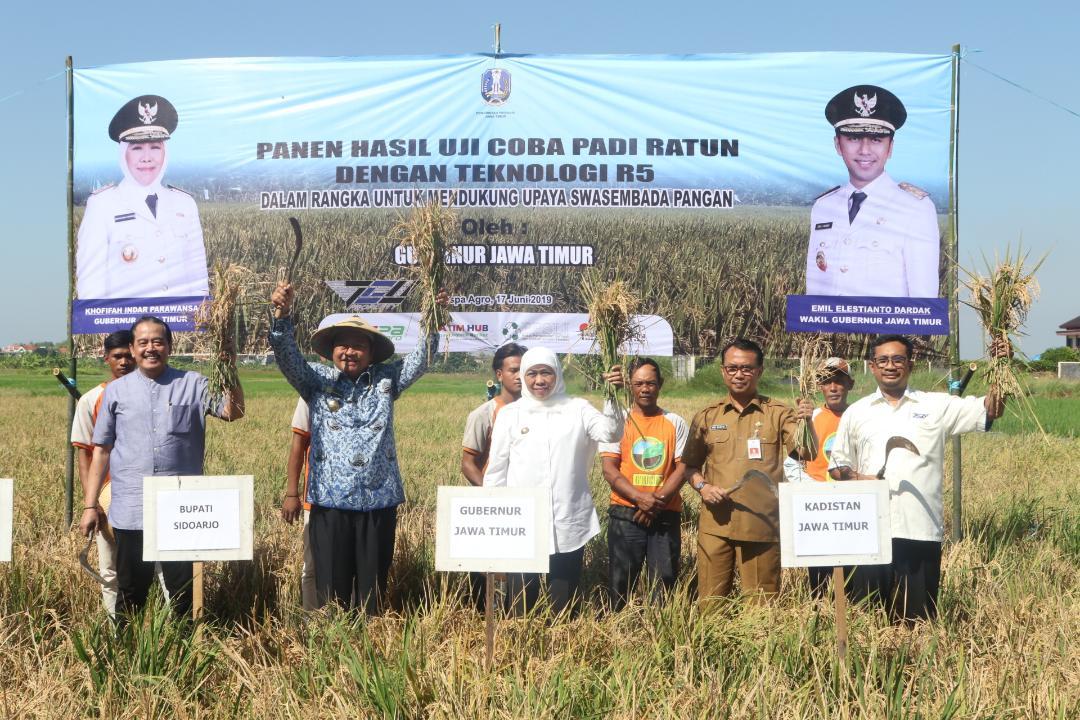Gubernur Khofifah Kembangkan Tanam Padi ratun Teknologi R5 Untuk Tingkatkan Kesejahteraan Petani