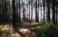 Sebentar Lagi, Pengguna Jalan Wonosobo – Purworejo bisa Istirahat di Rest Area Wana Wisata Burat