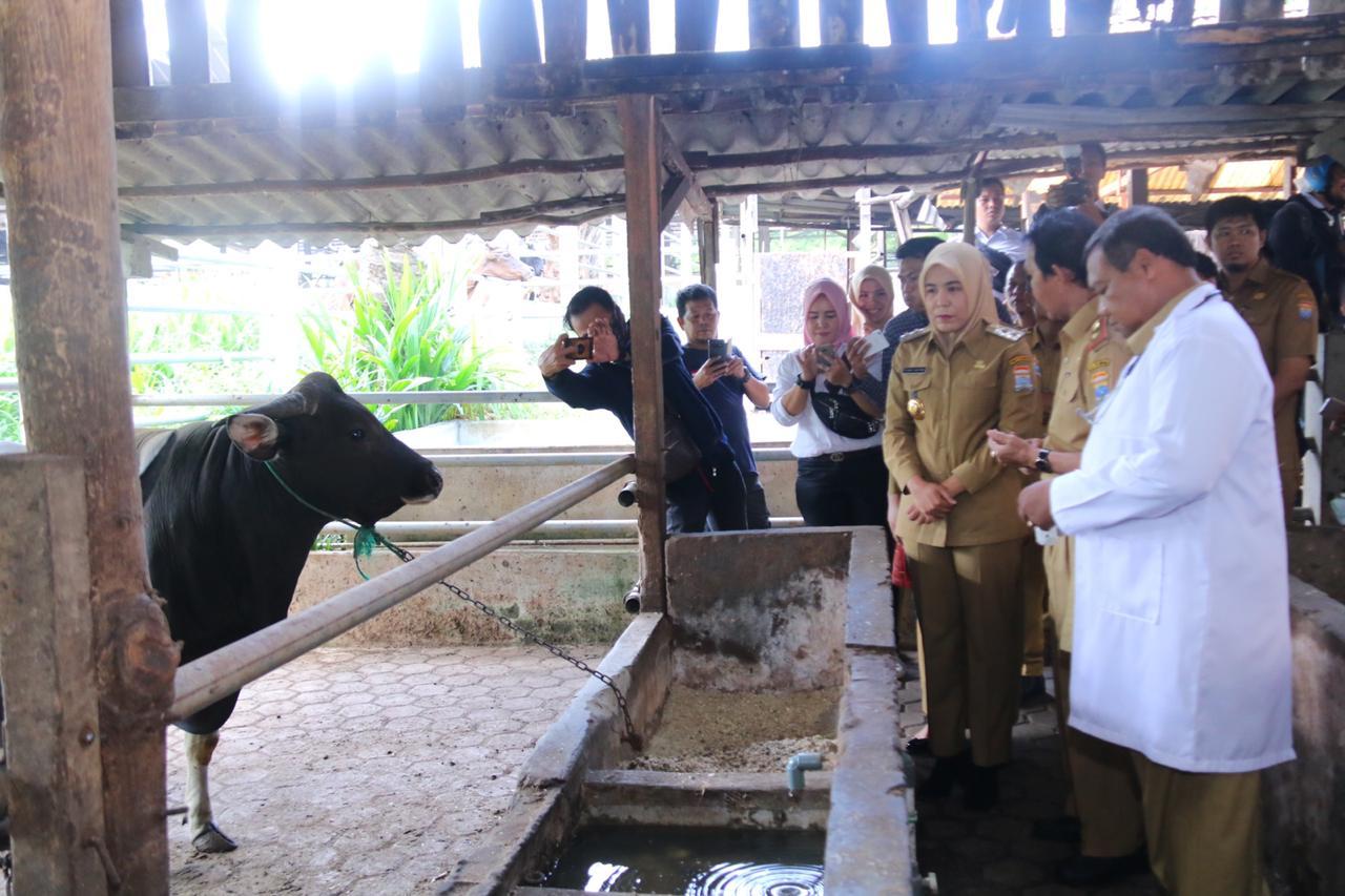 Wakil Walikota Palembang Tinjau Ketersediaan Hewan Qurban