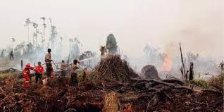 Ketua DPR Minta BNPB dan BNPD Tanggulangi Asap Kebakaran Hutan