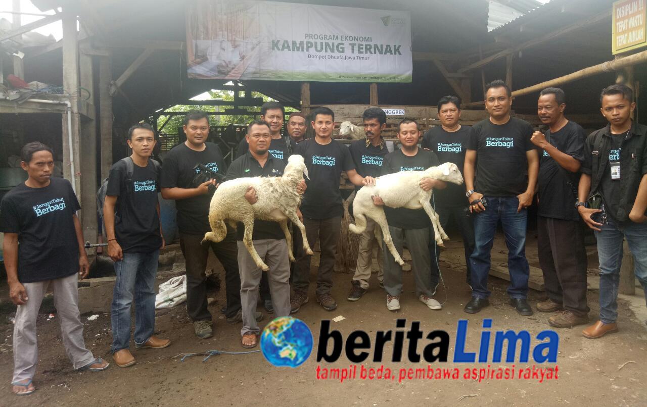 Dompet Dhuafa Distribusikan Ratusan Ekor Domba Kurban Di Jatim & Bali