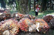 Fadli Zon Nilai Pemerintah Tidak Serius Tindak Industri Sawit 'Nakal'