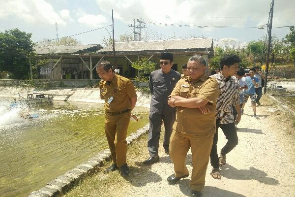 Ketua DPRD Sumenep Tinjau Lokasi Tambak Udang di Kecamatan Bluto