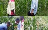 Dinas Pertanian Lakukan Ujicoba Tiga Bibit Jagung Unggul