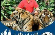 Konflik antara Manusia dengan Harimau salah siapa ?