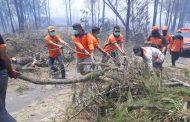 Ratusan Hektare Kawasan Ijen Bondowoso Terbakar, Pendakian untuk Sementara Ditutup