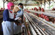 Gubernur Khofifah Imbau Masyarakat Tak Perlu Cemas Konsumsi Telur Jatim Karena Diproduksi Dengan Pola Good Farming Practices
