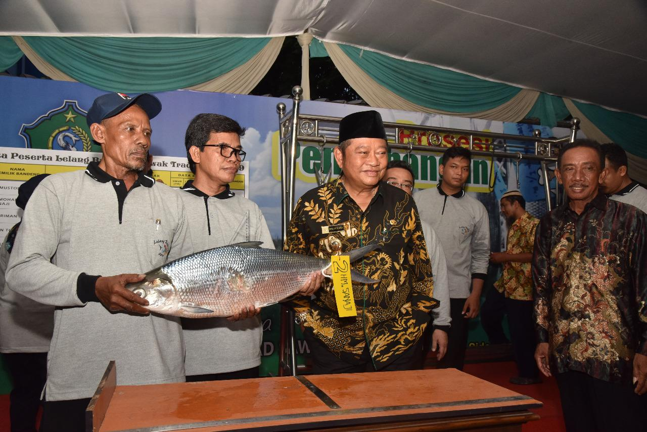 Juara 1 Lelang Bandeng Sidoarjo, Berat Bandeng Kawak 7,66 kg dari Jabon