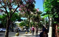 Surabaya Makin Cantik, Ribuan Pohon Tabebuya Bermekaran di Sepanjang Jalan Protokol