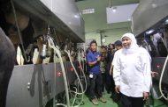 Kejar Target Jatim Swasembada Susu, Gubernur Khofifah Dorong Perluasan Peternakan Sapi Perah