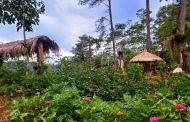 Wonosobo Tak Lama Lagi Punya Destinasi Wisata Baru, Wisata Alam Sibharat