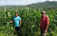 Ratusan Hektar Jagung Warga Akan Gagal Panen